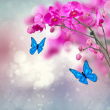 Violet orchid flowers with butterflies Royalty Free Stock Photos