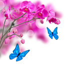Violet orchid flowers with butterflies Stock Photo
