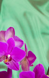 Violet Orchid Flowers with copyspace. Greeting Card - Violet Orchid Flowers on green sateen background with copyspace stock photos