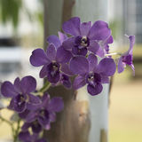 Violet orchid in health spa. Royalty Free Stock Photography