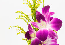 Violet orchid isolated on white background Stock Photography