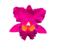 Violet orchid isolated on white Royalty Free Stock Photography