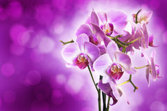Violet orchid on purple bokeh background Royalty Free Stock Images
