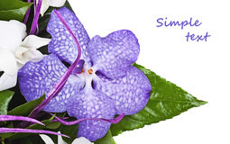 Violet orchid Royalty Free Stock Images