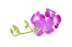 Violet orchid with stem on white background Stock Photo