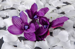 Violet orchid with white petals Stock Photos