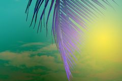 Violet palm leaf on yellow green sky background. Tropical nature abstract toned photo. Psychedelic coco palm leaf. Summer backdrop. Exotic island vacation stock illustration