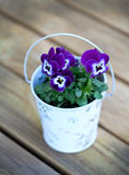 Violet pansies on wooden surface Royalty Free Stock Image