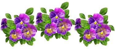 Violet Pansy pattern Royalty Free Stock Image