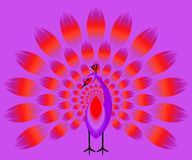 Violet peacock with a red shining tail Royalty Free Stock Photo