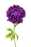 Violet peony artificial flower. Isolated on white background Stock Images