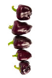 Violet peppers. Isolated on the white background Royalty Free Stock Image