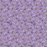 Violet phalaenopsis orchid flower seamless pattern texture Royalty Free Stock Photography