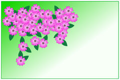 Violet phlox. Background with violet phlox  flowers. Vector illustration Royalty Free Stock Images
