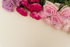 Violet and pink blooming roses Stock Image