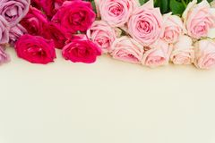 Violet and pink blooming roses Royalty Free Stock Photo