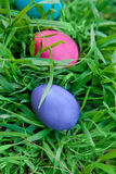 Violet and pink eggs in the grass Royalty Free Stock Image