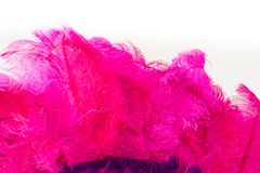 Back feathers and embroidery of carnival. Violet and pink feathers of the backs for the carnival royalty free stock photography