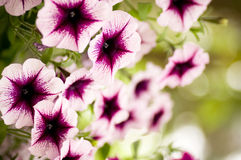 Violet and pink flowers on the park Stock Photography