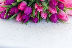 Pink fresh tulips royalty free stock photos