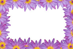 Violet pink lotus random border Stock Photography