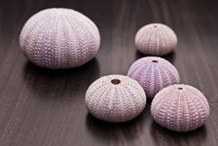 violet and pink shells  Stock Images