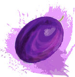 Violet plum. Fruit at white background with abstract purple spots, artistic painting, hand drawn vector illustration Stock Images