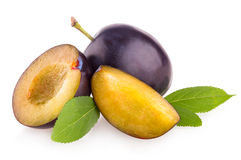 Violet plums Stock Photo