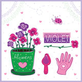 Violet Stock Images
