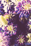 Violet and purle wild flowers macro shot Royalty Free Stock Image