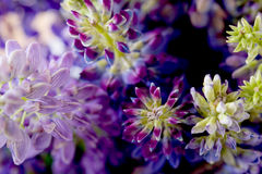 Violet and purle wild flowers macro shot Stock Photo