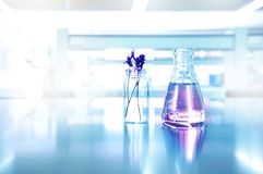 violet of purple flower in vial and glass flask in cosmetic research science laboratory background stock photo