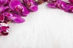 Violet purple orchid flowers decorated on wood can be used as background royalty free stock photo