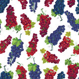 Violet and red grapes vector seamless print Stock Photo