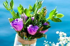 Violet rose bouquet outdoors. Royalty Free Stock Image