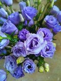 Violet rose Bouquet Royalty Free Stock Images