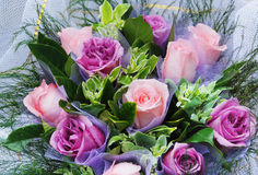 Violet rose bunch Royalty Free Stock Photos
