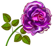 Violet rose. With transparent petals Royalty Free Stock Image