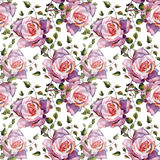 Violet rose , watercolor, pattern seamless, handmade Royalty Free Stock Photos
