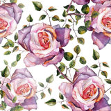 Violet rose , watercolor, pattern seamless, handmade Royalty Free Stock Image