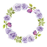 Violet roses flower watercolor wreath Royalty Free Stock Photos