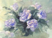 Violet roses watercolor background. Birthday card. Spring flowers Royalty Free Stock Image