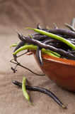Violet Runner Bean Stock Photography