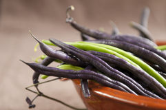 Violet Runner Bean Royalty Free Stock Photo