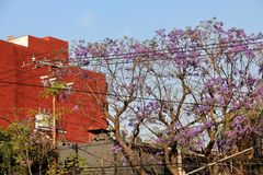 Violet and Rust. View from the streets of Coyocan District in Mexico City. Highlighting the beauty of the contrast of colours of rust and violet as well as the royalty free stock images