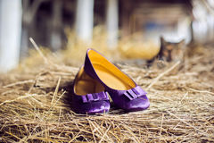 Violet shoes and a cat Royalty Free Stock Photos