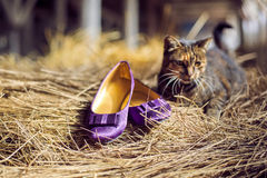 Violet shoes and a cat Stock Photography