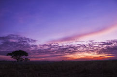 Violet sky in the early morning Stock Photo