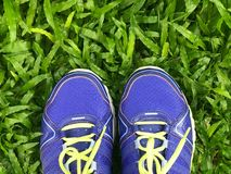 Violet sport shoe. On green grass Royalty Free Stock Photo