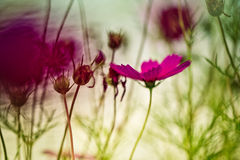 Violet Spring Flower Stock Image